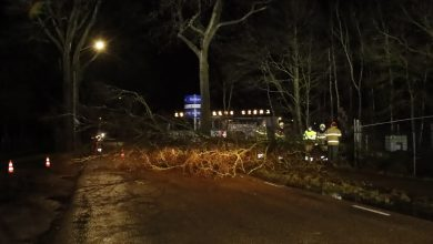 Photo of Boom versperd Zeelandsedreef in Schaijk door storm